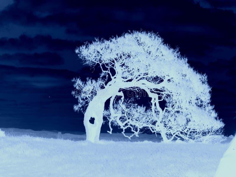 δέντρο αποκριών στοκ φωτογραφίες με δικαίωμα ελεύθερης χρήσης