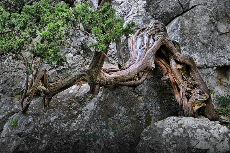 δέντρο απότομων βράχων στοκ εικόνα με δικαίωμα ελεύθερης χρήσης