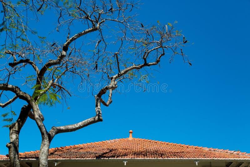 Δέντρο από την κόκκινη στέγη κεραμιδιών στοκ φωτογραφία