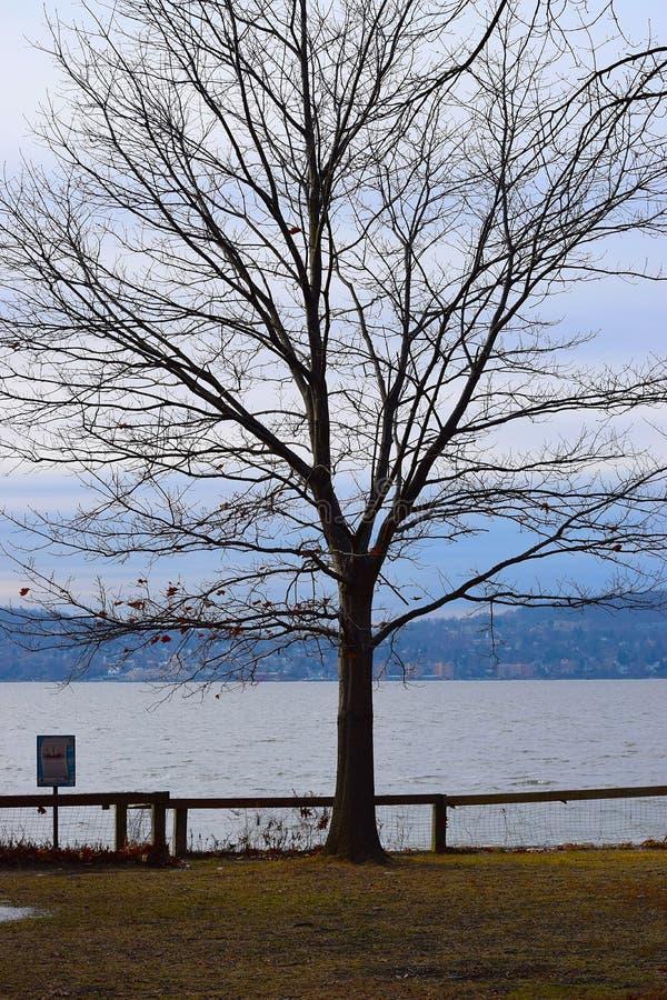 Δέντρο από το νερό στοκ εικόνες
