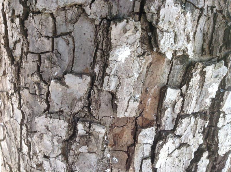 Δέντρο αχλαδιών δέντρων αχλαδιών υποβάθρου στοκ φωτογραφίες