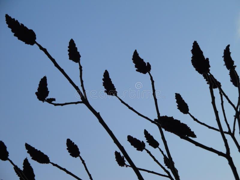 Δέντρο βελούδου στοκ φωτογραφία με δικαίωμα ελεύθερης χρήσης