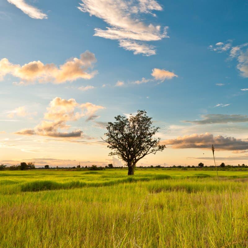 Δέντρο βραδιού στοκ εικόνες