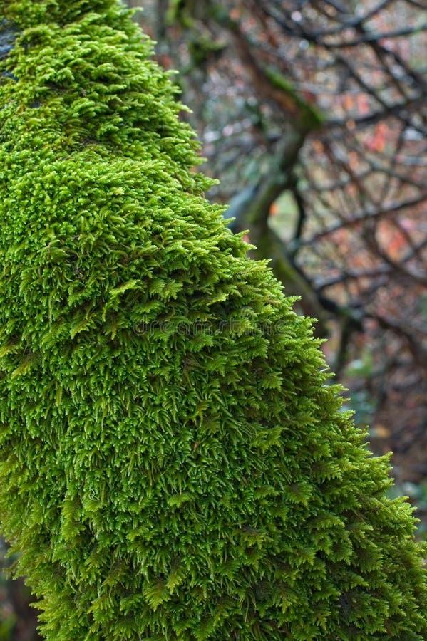 Download δέντρο βρύου στοκ εικόνες. εικόνα από φύση, υγρός, χλωρίδα - 389054