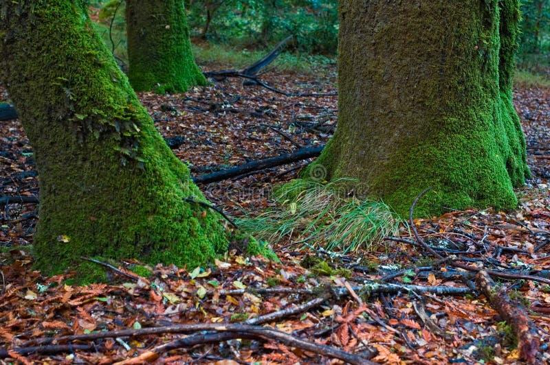 Download δέντρο βρύου στοκ εικόνα. εικόνα από χλωρίδα, φυσικός, φύση - 389067