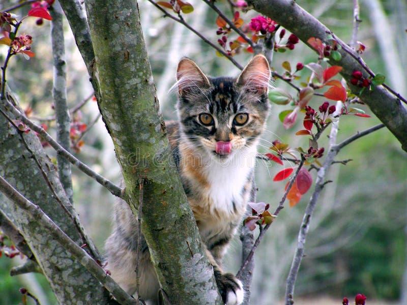 δέντρο γατακιών στοκ εικόνα με δικαίωμα ελεύθερης χρήσης