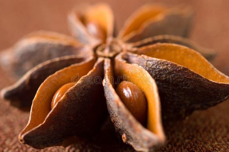δέντρο γλυκάνισου στοκ εικόνα
