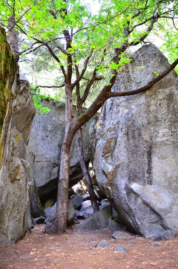 δέντρο δενδρυλλίων γρανί&tau στοκ εικόνες