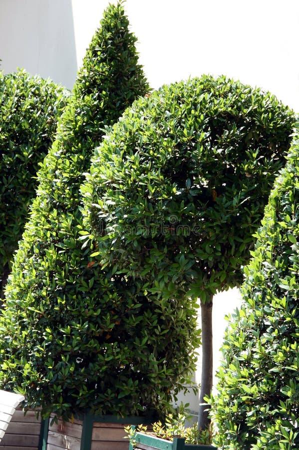 δέντρο δοχείων κιβωτίων στοκ εικόνες