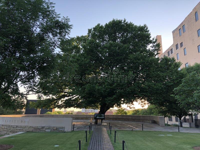 Δέντρο επιβίωσης στο εθνικό μνημείο & μουσείο στη Πόλη της Οκλαχόμα στοκ φωτογραφία με δικαίωμα ελεύθερης χρήσης