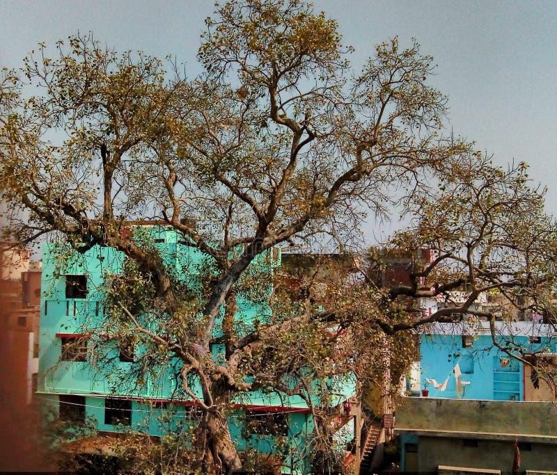 Δέντρο εποχής άνοιξης στοκ εικόνα με δικαίωμα ελεύθερης χρήσης