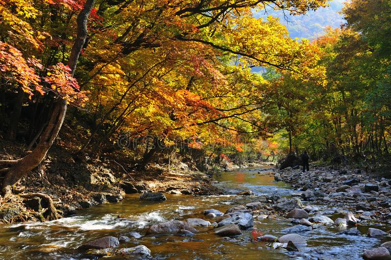 Δέντρο εποχής φθινοπώρου στοκ εικόνες