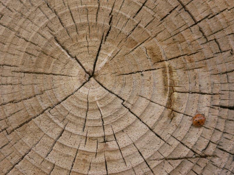Download δέντρο ζωής στοκ εικόνα. εικόνα από πρότυπο, δάσος, σύσταση - 76085