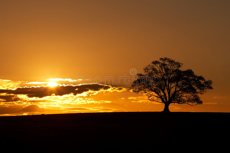 δέντρο ηλιοβασιλέματος σκιαγραφιών στοκ φωτογραφία με δικαίωμα ελεύθερης χρήσης