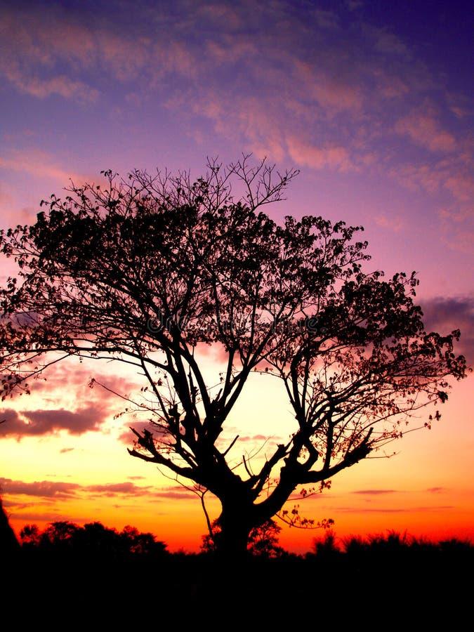δέντρο ηλιοβασιλέματος 0 στοκ φωτογραφίες με δικαίωμα ελεύθερης χρήσης