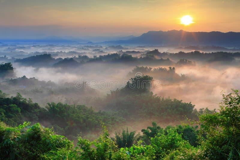 δέντρο ηλιοφάνειας βουνώ στοκ εικόνες με δικαίωμα ελεύθερης χρήσης