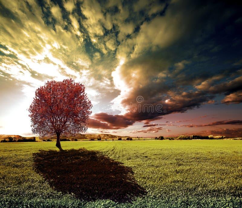 Δέντρο ηλιοβασιλέματος και πράσινοι τομείς στοκ φωτογραφίες με δικαίωμα ελεύθερης χρήσης