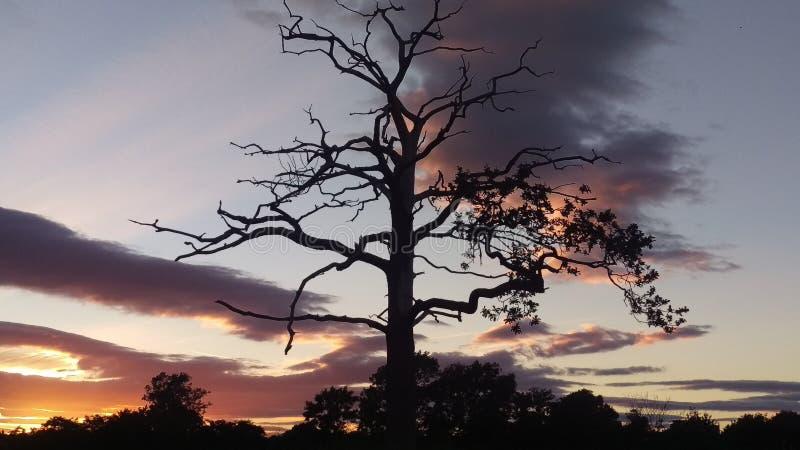 Δέντρο ηλιοβασιλέματος στη σκιαγραφία στοκ εικόνες με δικαίωμα ελεύθερης χρήσης