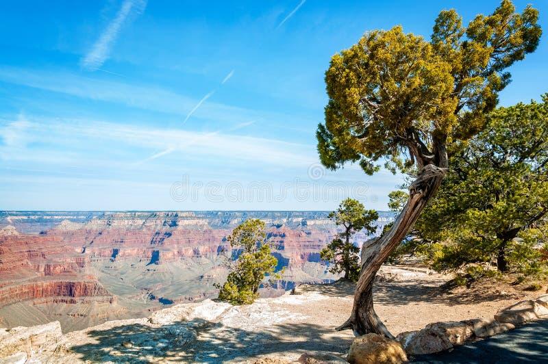 Δέντρο ιουνιπέρων στο σημείο Hopi στο μεγάλο φαράγγι στοκ φωτογραφία με δικαίωμα ελεύθερης χρήσης