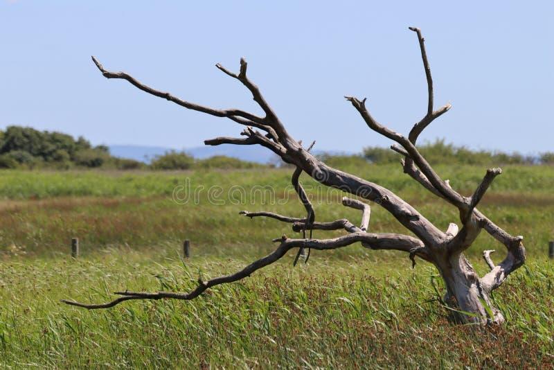 Δέντρο κάπου στοκ εικόνες