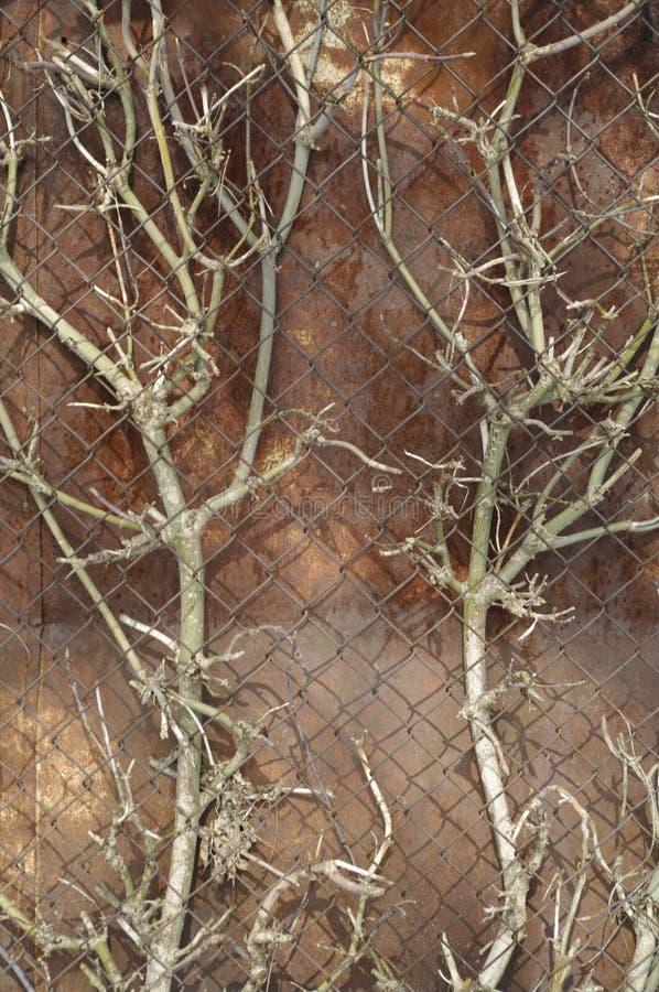 Δέντρο κάτω από το καθαρό metall στοκ εικόνα