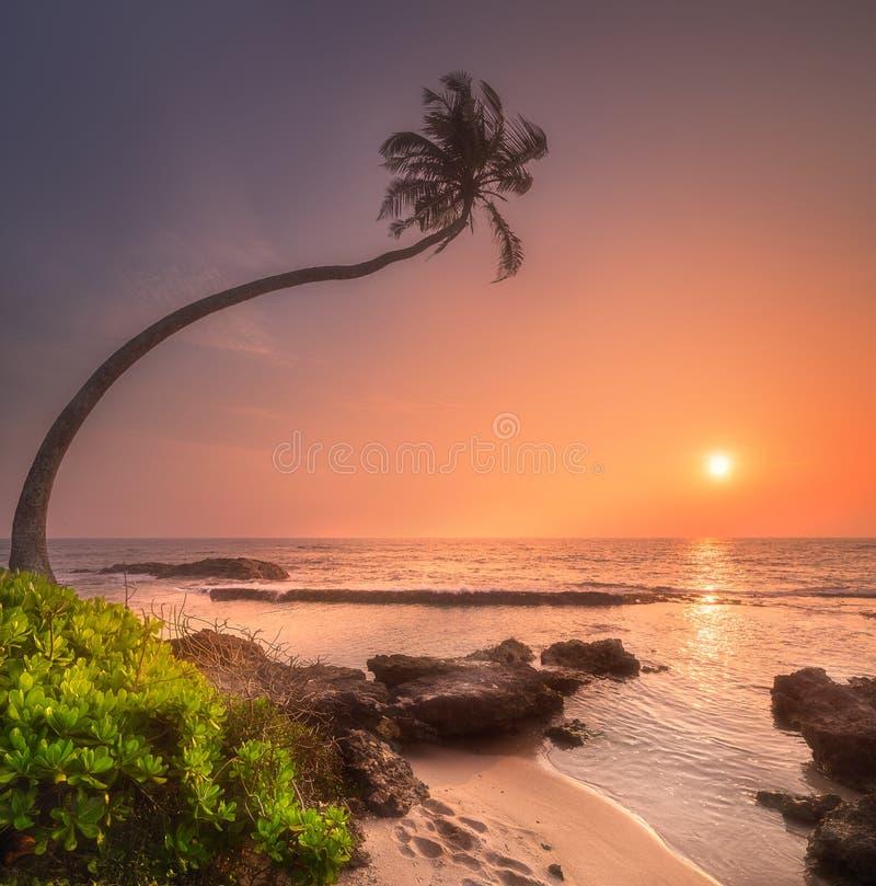 Δέντρο κάτω από το νερό και την ακτή της παραλίας της Σρι Λάνκα στοκ φωτογραφία