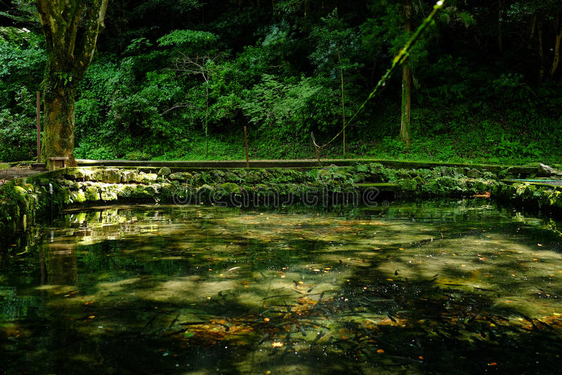 Δέντρο και λίμνη στοκ φωτογραφίες
