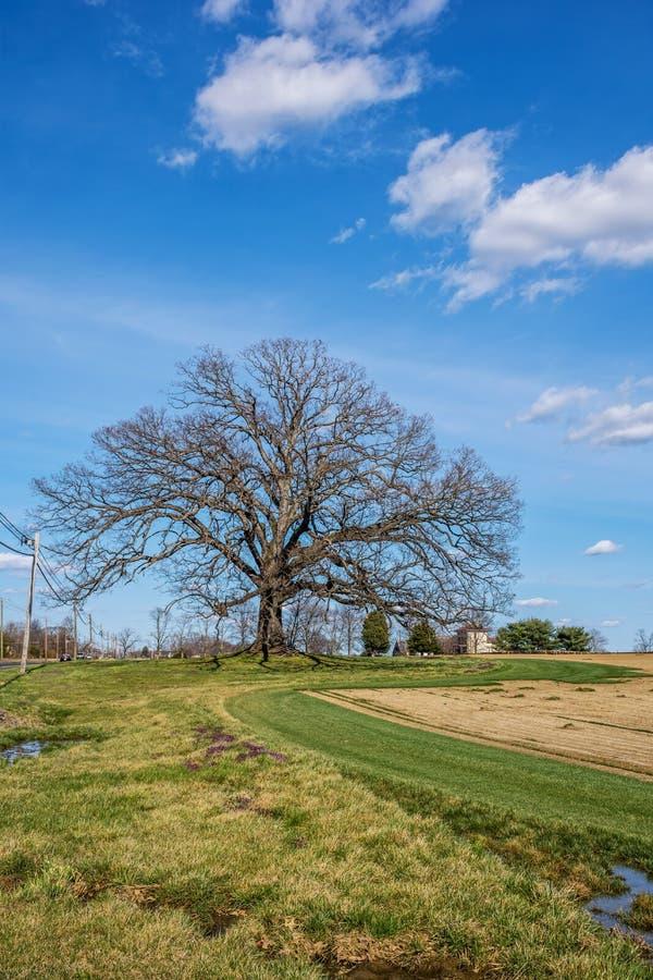 Δέντρο και αγροτικός τομέας στοκ εικόνα