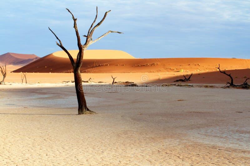 Δέντρο και αμμόλοφοι στην έρημο στοκ φωτογραφία με δικαίωμα ελεύθερης χρήσης