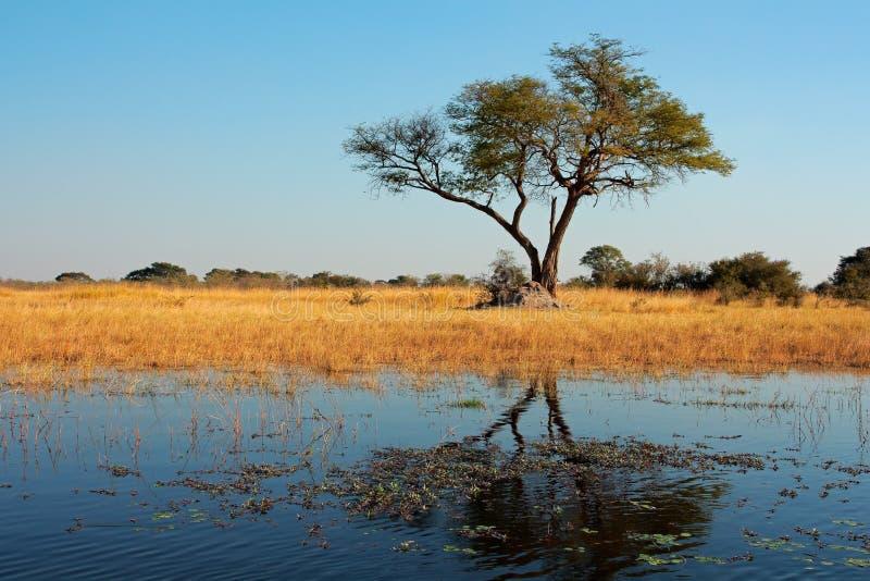 Δέντρο και αντανάκλαση στοκ εικόνα