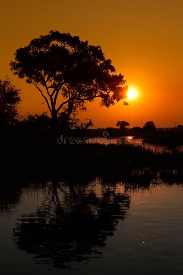 Δέντρο και αντανάκλαση στοκ εικόνα με δικαίωμα ελεύθερης χρήσης