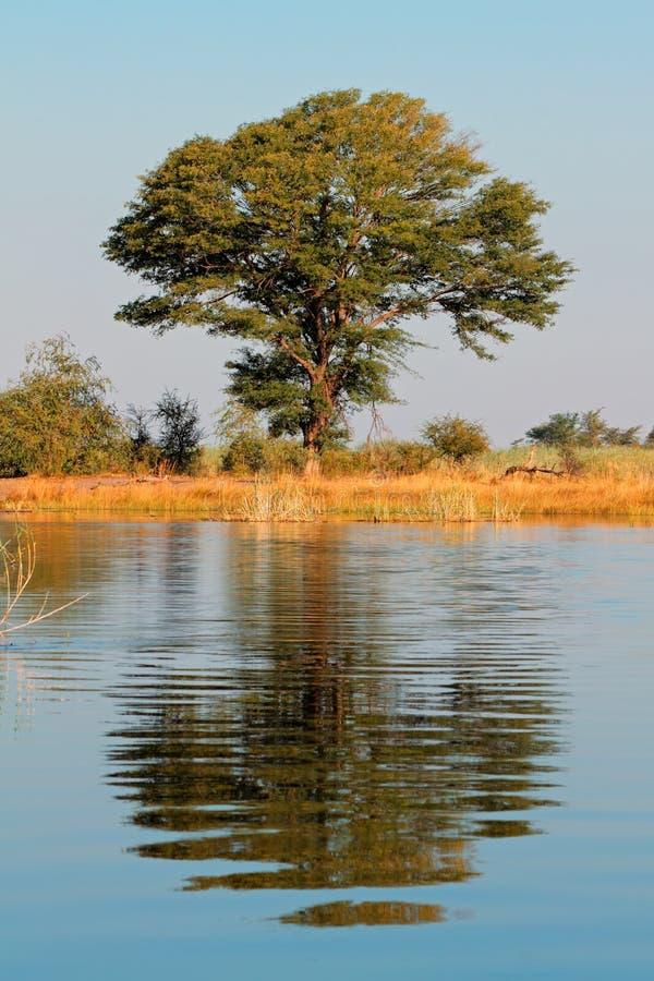 Δέντρο και αντανάκλαση στοκ φωτογραφία