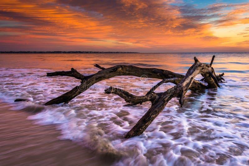 Δέντρο και κύματα στον Ατλαντικό Ωκεανό στην ανατολή σε Driftwood Bea στοκ φωτογραφίες