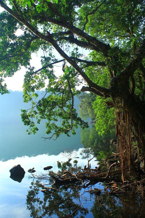 Δέντρο και λίμνη στοκ εικόνες με δικαίωμα ελεύθερης χρήσης