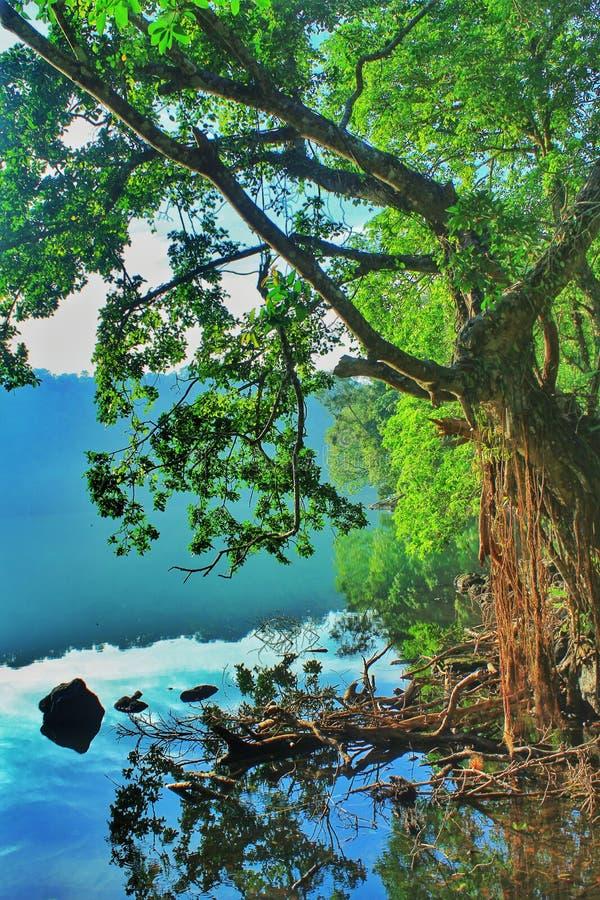 Δέντρο και λίμνη στοκ εικόνες