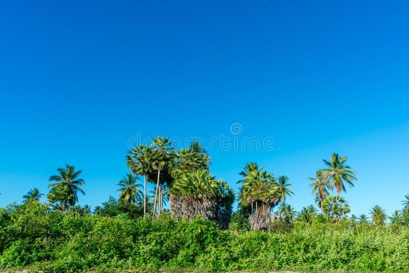 Δέντρο και μπλε ουρανός Coconute στοκ φωτογραφίες με δικαίωμα ελεύθερης χρήσης