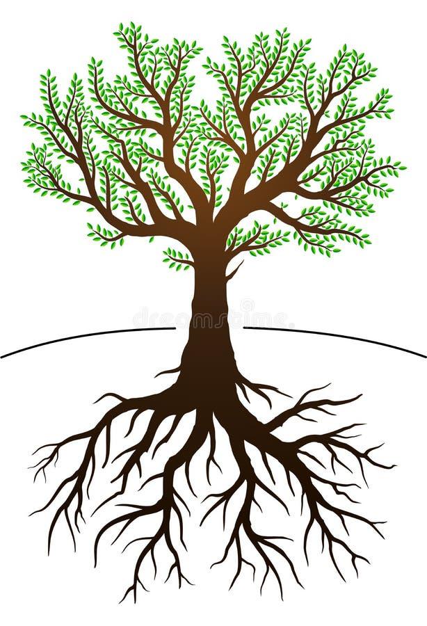 Δέντρο και οι ρίζες του διανυσματική απεικόνιση