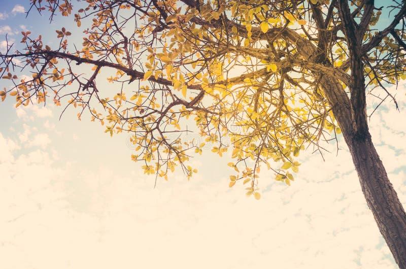 Δέντρο και ουρανός στην επαρχία στοκ φωτογραφία με δικαίωμα ελεύθερης χρήσης