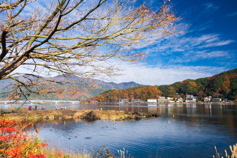 Δέντρο και ουρανός το φθινόπωρο στοκ εικόνα
