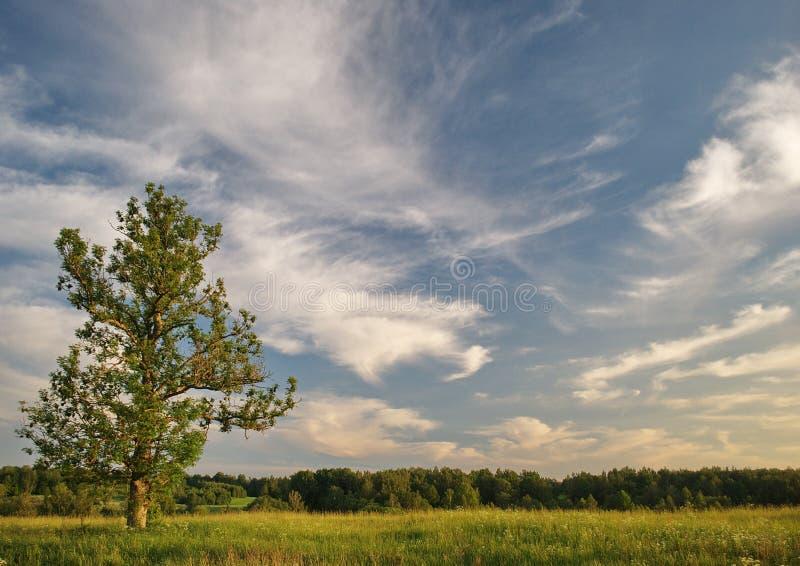 Δέντρο και ουρανός στοκ εικόνες με δικαίωμα ελεύθερης χρήσης