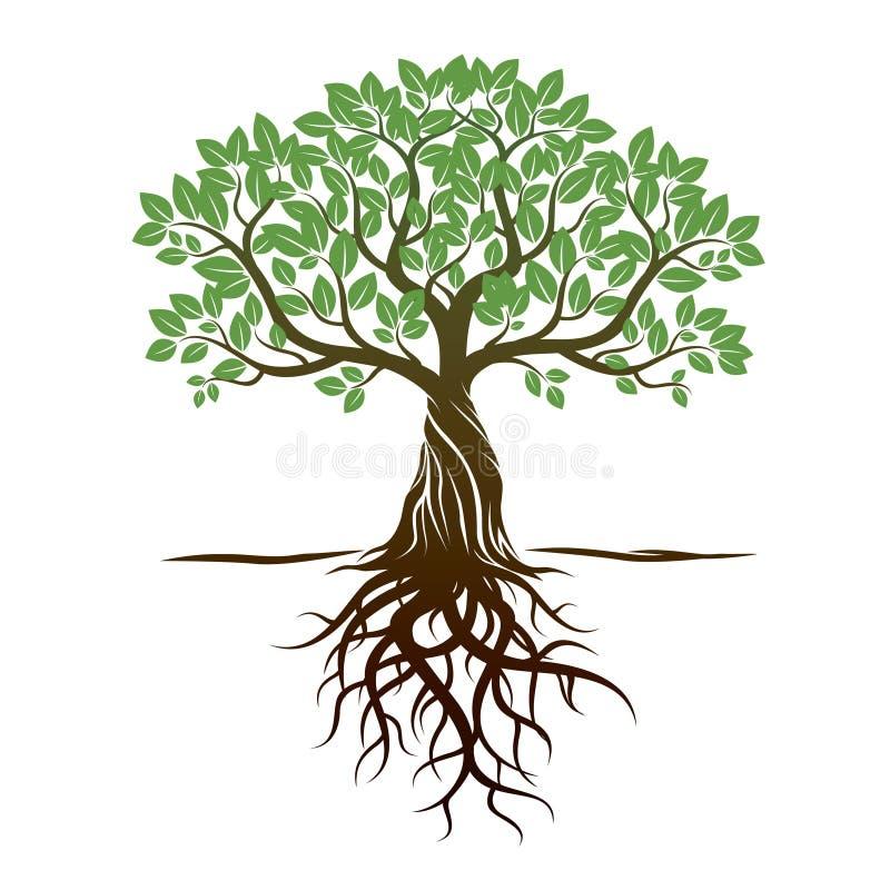 Δέντρο και ρίζες χρώματος επίσης corel σύρετε το διάνυσμα απεικόνισης απεικόνιση αποθεμάτων