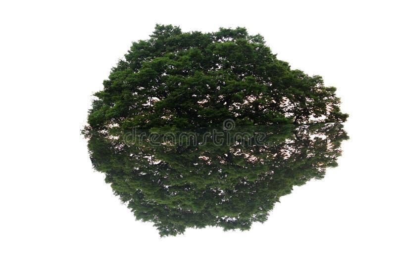 Δέντρο και σκιά στοκ φωτογραφίες