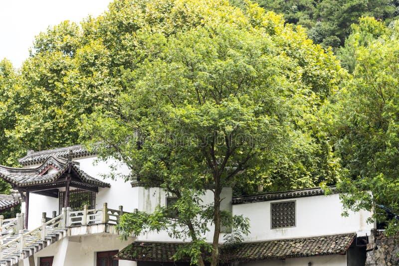 Download Δέντρο και τοίχος στοκ εικόνες. εικόνα από επαρχία, τοίχος - 62712482