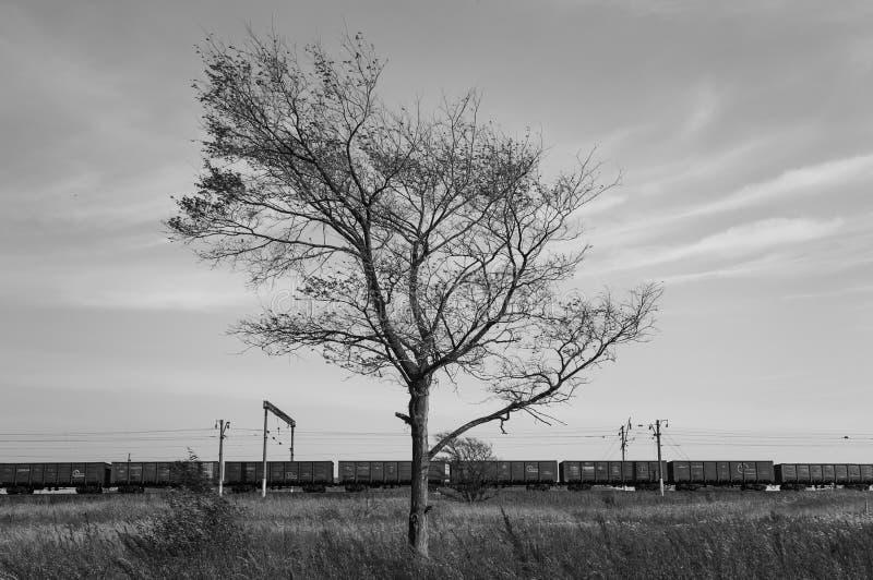 Δέντρο και τραίνο bw στοκ φωτογραφία με δικαίωμα ελεύθερης χρήσης