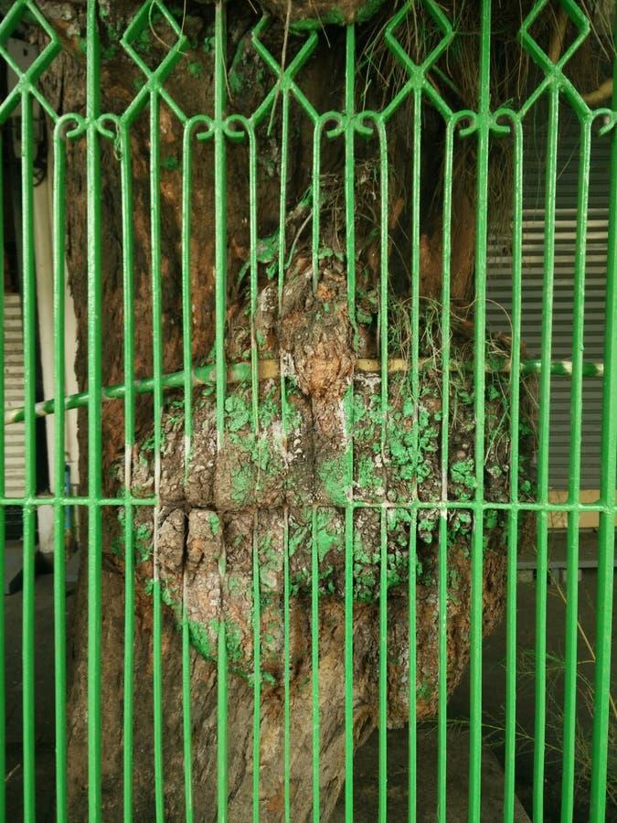 Δέντρο και φράκτης που λειώνουν από κοινού στοκ εικόνα