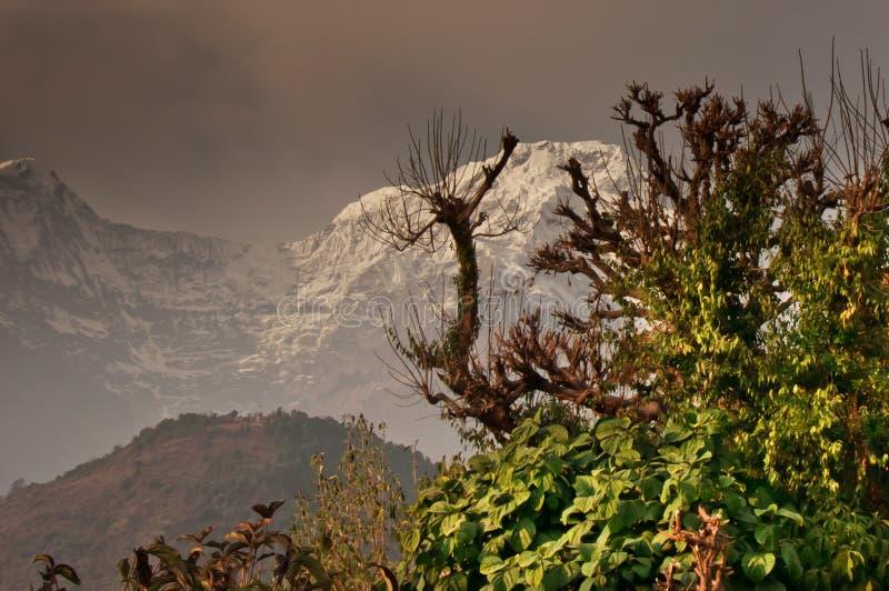 Δέντρο και χιονώδες βουνό , πραγματοποιώντας οδοιπορικό στο Annapurna στοκ φωτογραφία με δικαίωμα ελεύθερης χρήσης