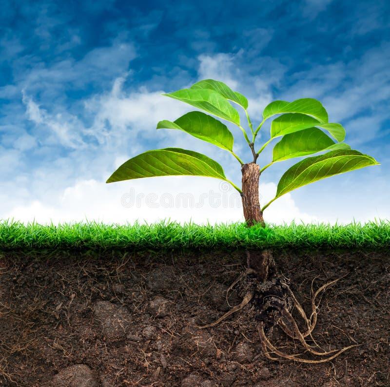 Δέντρο και χώμα προέλευσης με τη χλόη στο μπλε ουρανό διανυσματική απεικόνιση