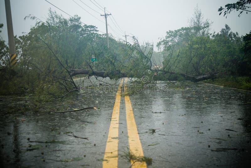 Δέντρο και debri στο δρόμο κατά τη διάρκεια του τυφώνα στοκ εικόνα με δικαίωμα ελεύθερης χρήσης