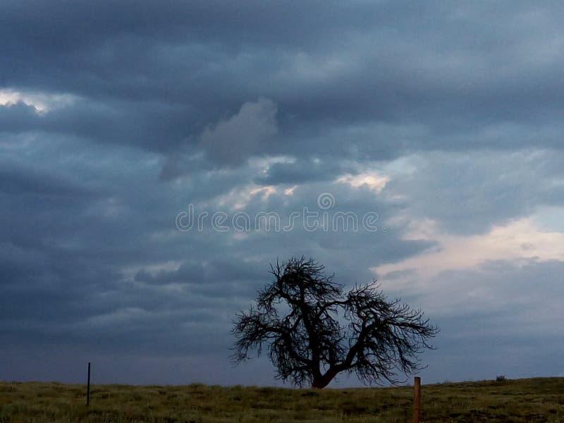 δέντρο κακό στοκ εικόνα