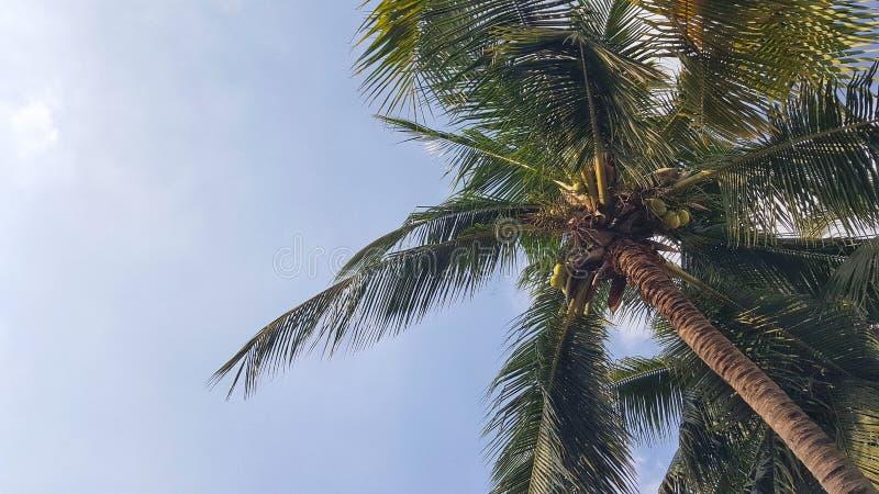 Δέντρο καρύδων στο υπόβαθρο ουρανού στοκ εικόνες